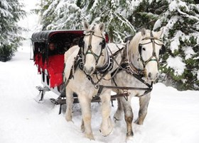 Looking for a romantic and cool Winter adventure. Try Whistler sleigh rides.